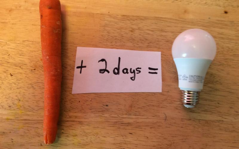 "Photo image of carrot follwed by paper saying ""+ 2 days +"" followed by an LED lightbulb"